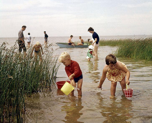 Children trying to catch fish with buckets