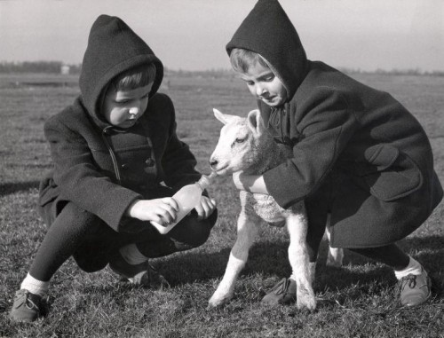 Children Playing with Lamb