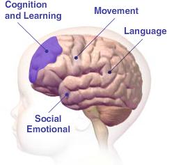 Baby Brain Map